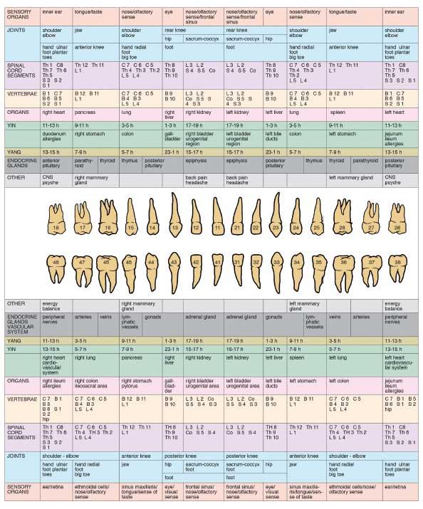 Diş Meridyan Sistemi