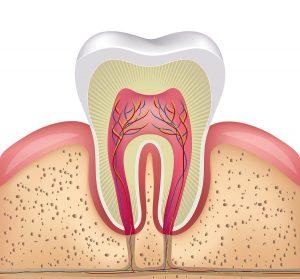 Kanal Tedavisi (Endodonti)